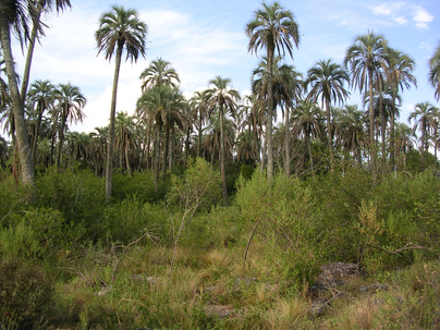 Field site at El Palmar National Park, Entre Rios, Argentina