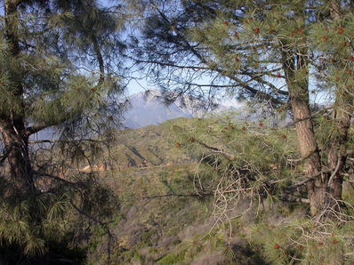 Image of dield site at San Dimas Experimental Forest, Los Angeles County, California, USA