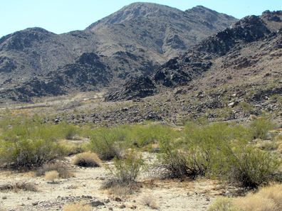 Image of field site at Zzyzx, San Bernardino County, California, USA