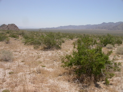 Image of field site at Desert Center, USA